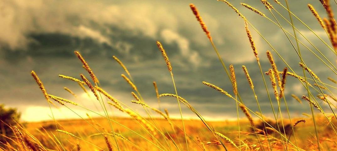 Reseña: El Camino – Miguel Delibes